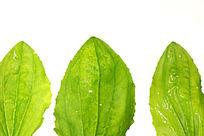 绿色树叶叶脉高质感大图