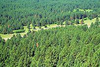 全国惟一的沙地樟子松原始森林