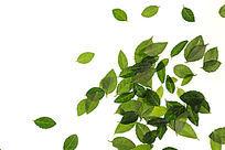 洒落在白背景上的绿色树叶