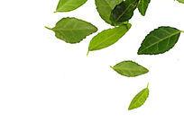 色彩艳丽的绿色树叶大图