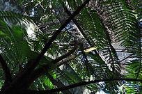 室内栽培的热带树种