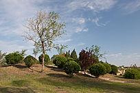 小区园林的绿树与灌木