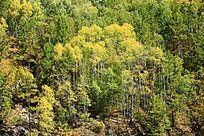 原始森林秋季风光
