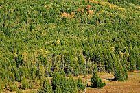 原始森林秋林