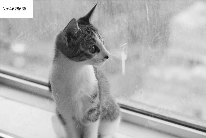 黑白窗口远眺的条纹猫咪图片,高清大图_陆地动物素材