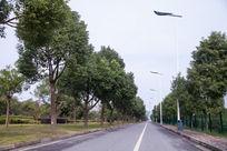 两排树的马路