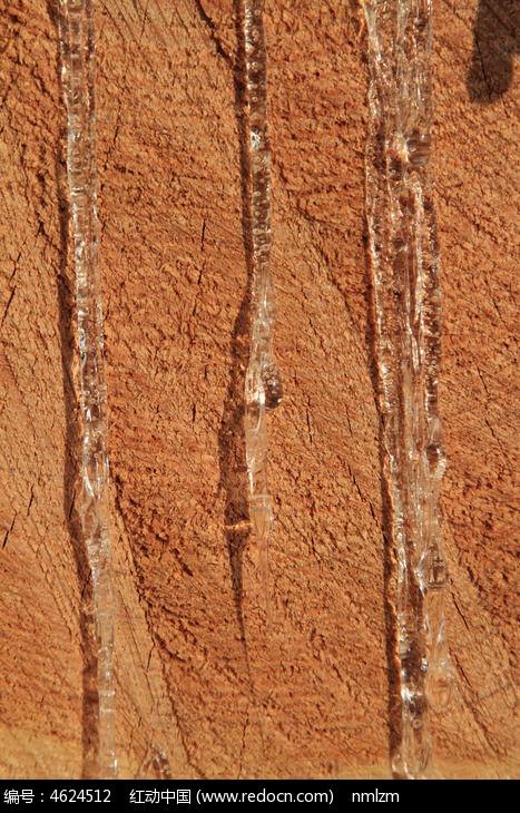 木材流出的松油图片