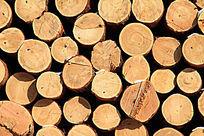 木材(原木)截面