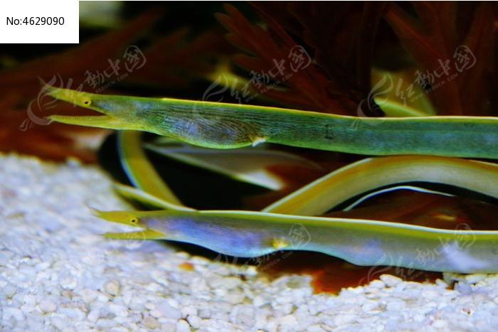 水生物图片,高清大图_水中动物素材
