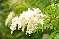 一簇白色的花和叶子