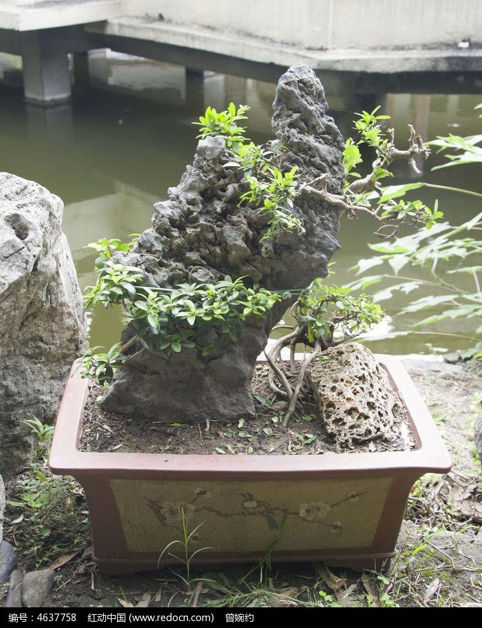 植物山石盆栽图片