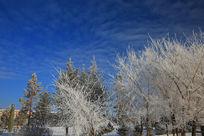 白色的树挂