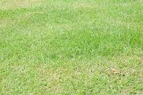 草地 绿色 绿色草地