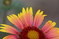 红黄相间暖色花瓣