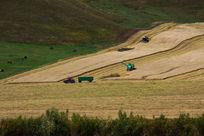 收割农田景观