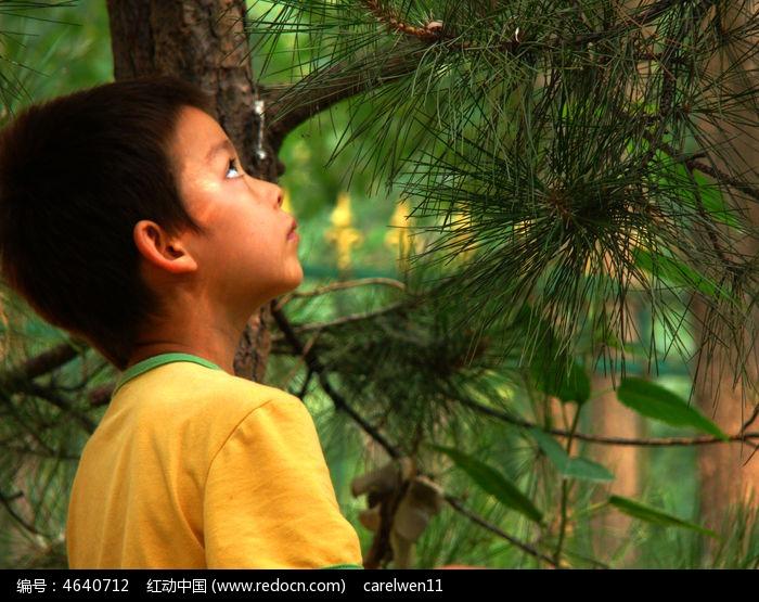 抬头看树上的松花的孩子图片