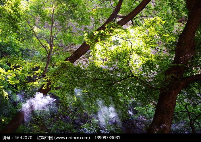 原始森林里的树图片,高清大图_树木枝叶素材