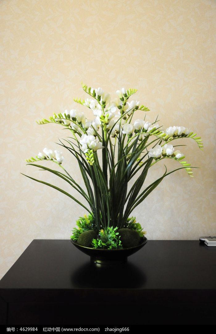 植物花卉装饰摆件图片