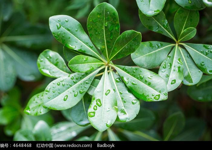 原创摄影图 动物植物 花卉花草 春天绿叶水珠  请您分享: 红动网提供