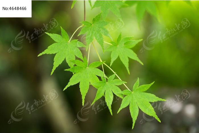 手绘绿色植物春