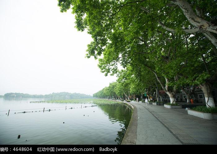 杭州西湖北山路梧桐树图片,高清大图_江河湖泊素材