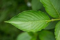 绿色植物春天清新