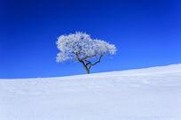 雪地里的一棵树