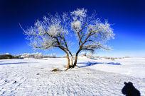 内蒙坝上雪景风光