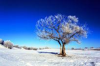 坝上雪景风光
