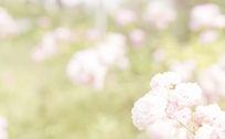 唯美小清新花朵背景素材