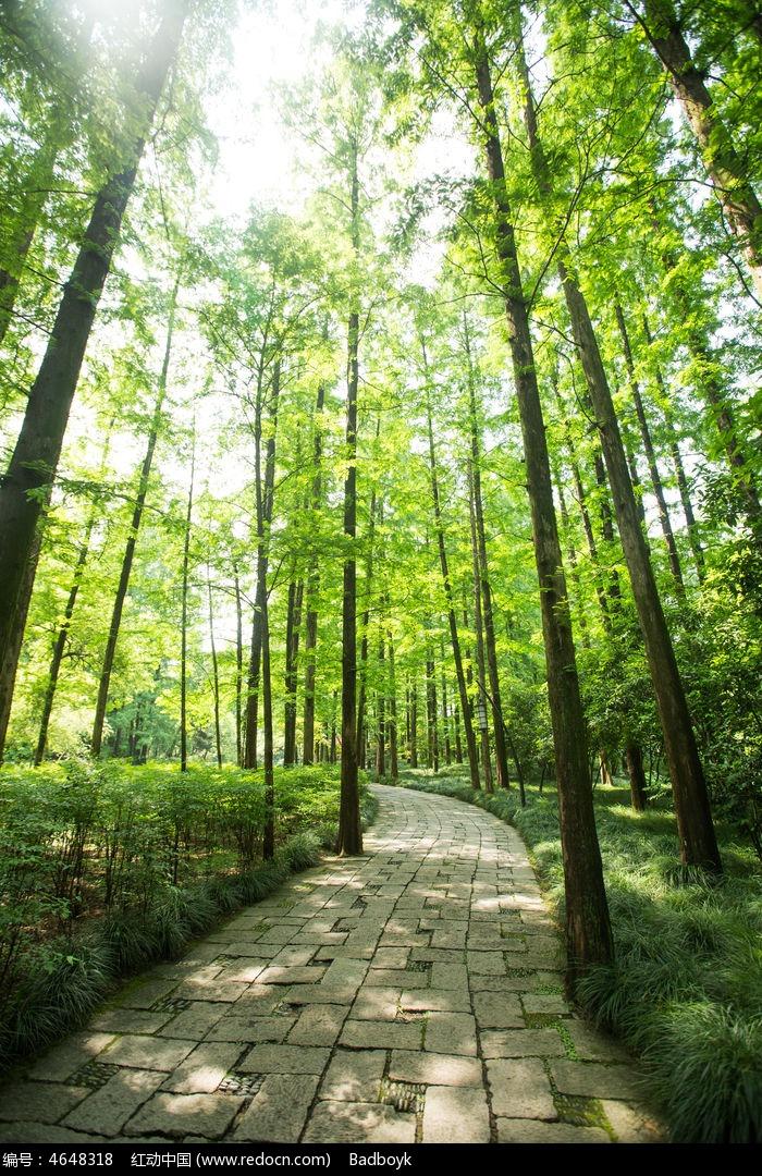 阳光植物竹林图片,高清大图_树木枝叶素材