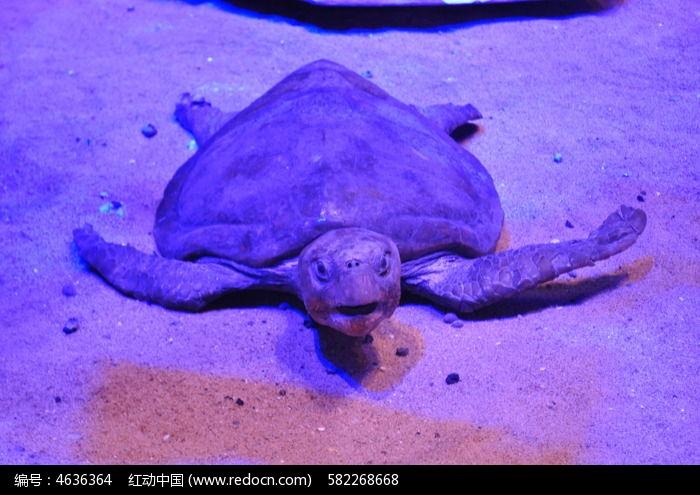 张开嘴巴的大海龟图片,高清大图_动物植物素材