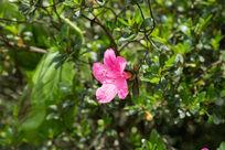 植物花卉花朵微距