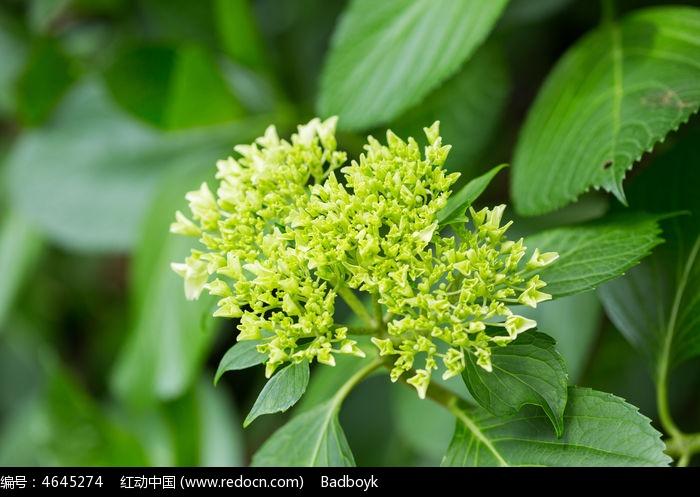 原创摄影图 动物植物 花卉花草 植物树叶绿叶花卉花朵  请您分享: 红