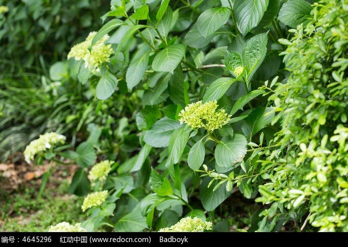 植物树叶绿叶花卉花朵高清图片下载 红动网