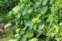 植物树叶绿叶花卉花朵