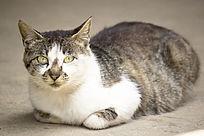 蹲地上的猫
