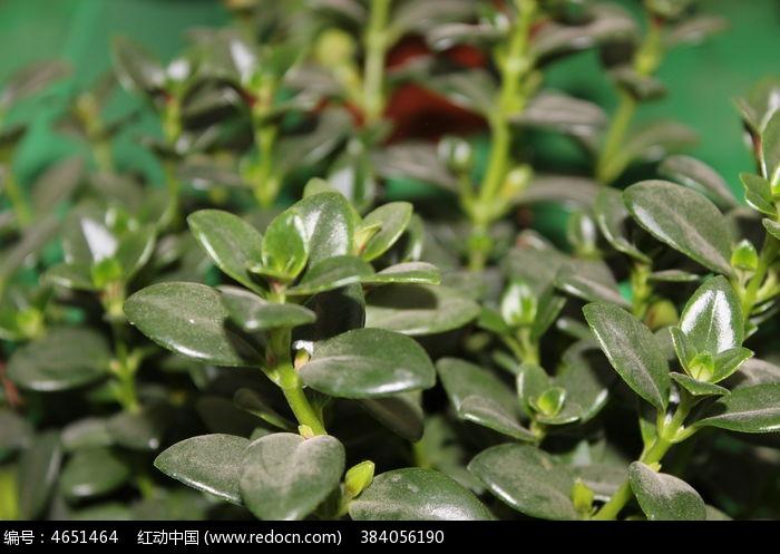 原创摄影图 动物植物 花卉花草 绿色的植物