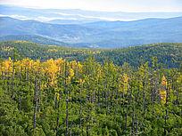 茫茫的原始森林秋景