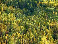 秋天原始森林