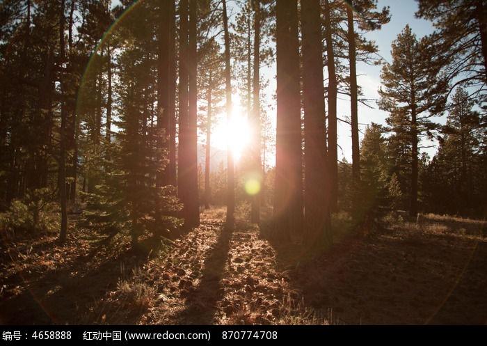 森林阳光图片,高清大图_树木枝叶素材