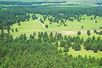 沙地樟子松原始森林