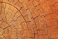 松树年轮图案