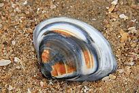 一个五彩斑斓的贝壳