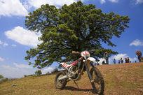 东川神树和摩托车
