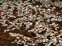 茅兰沟河面上的秋叶