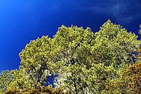 香格里拉森林