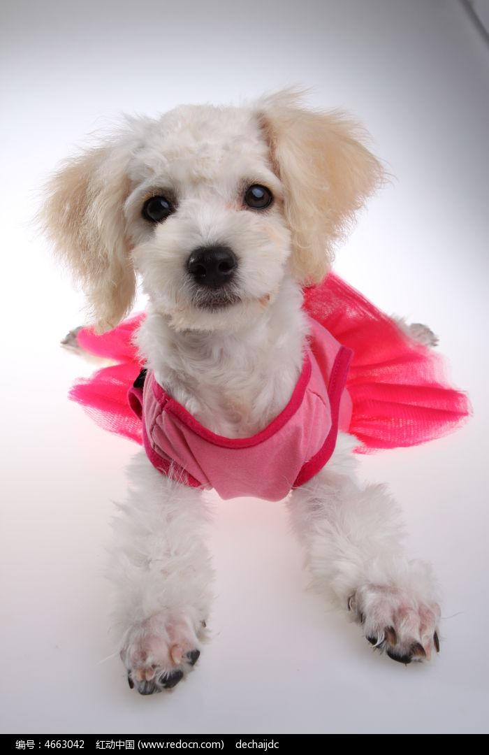 小狗穿衣服图片
