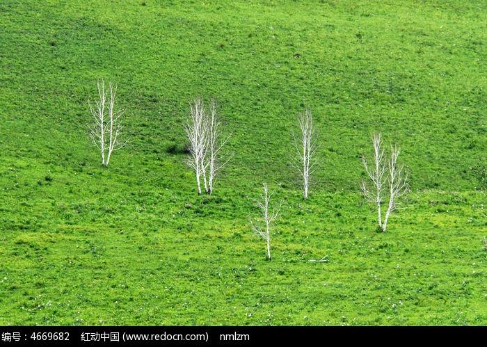 小树图片,高清大图_森林树林素材
