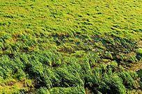 雁窝岛湿地草甸景观